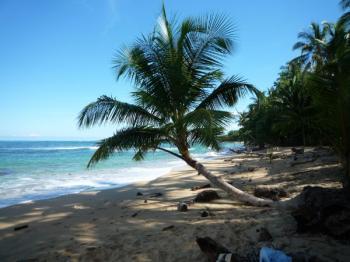 Villa Mieten Barbados Surfen